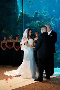 Florida Aquarium Coral Reef Room, Tampa Photographers, Celebrations of Tampa Bay http://celebrationsoftampabay.com/