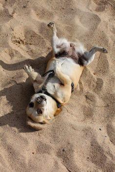 Kalajoki sand  <3 Finland, Kangaroo, Random, Cats, Nature, Animals, Dog Cat, Baby Bjorn, Gatos