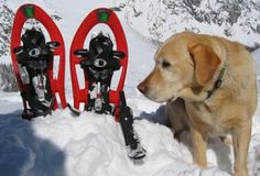 Snowshoeing with your Dog: A great way to explore winter together Washington Mountains, Cascade Mountains, Cold Night, Backpacking Tips, Wilderness Survival, Winter Activities, Border Collie, The Great Outdoors, Dog Training