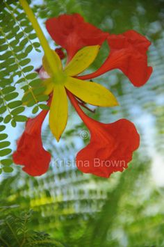 Nature Photography Red Flower Photo Plant by SilverBirdBoutique, $25.00