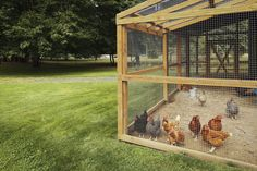 """Hey guys! It's Scott's (my husband…otherwise known as the """".com"""" of Steamy Kitchen) first post! ~Jaden When Jaden brought home 5 fluffy new friends in July of last year, I knew a chicken coop was i…"""