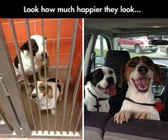 Look how much happier they look on the ride home after being adopted....