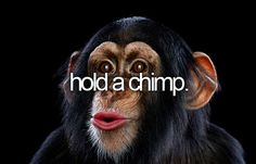 Hold a chimp.