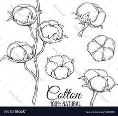 Hand drawn decorative cotton flowers vector image on VectorStock Illustration Noel, Plant Illustration, Farmhouse Paintings, Realistic Rose, Wreath Drawing, Floral Drawing, Plant Drawing, Art Wall Kids, Art Sketchbook