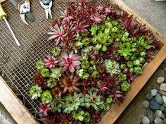 Simple Deko aus Sukkulenten So wird ein vertikaler Garten gemacht