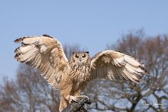 Rate this amazing photo that Joan entered in 'The Wonder of Flight'. Do some rating @photocrowd