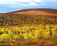 Colours of Autumn in Finnish Lapland, by Lapland Safaris, Finland. Summer Pictures, Cool Pictures, Fall Photos, Summer Activities, Helsinki, Four Seasons, Mother Nature, Wilderness, Scenery