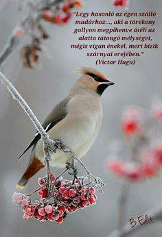 Quotations, Literature, Life Quotes, Literatura, Quotes About Life, Quote Life, Living Quotes, Quotes On Life, Quotes