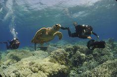 Las tortugas de Hurghada, Egipto    Como si de estrellas de Rock se trataran, las tortugas son los animales marinos más buscados en las aguas del Mar Rojo, pese a que no es difícil dar con ellas. www.buces.es    Vía: traveler.es