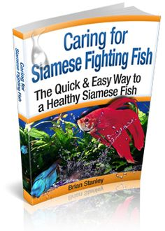 1000 images about how to take care of a betta fish on for How to care for betta fish