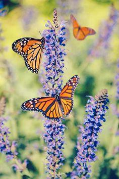 Cottage Wallpaper, Landscape Design Plans, Good Morning Wallpaper, Garden Planner, Butterfly Wallpaper, Flower Aesthetic, Love Images, Monarch Butterfly, Good Morning Images