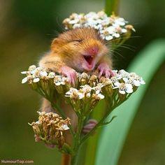Top 41 des animaux qui sourient - voilà les animaux les plus heureux du monde