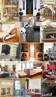 Amazing ideas on how to incorporate dogs into your house. I especially love the dog food drawer in kitchen! That way your baby doesn't eat the dog food!