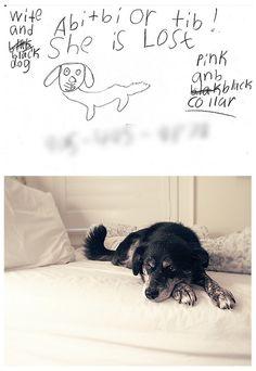 Dog Training Tips : Separation Anxiety Dog Separation Anxiety, Dog Anxiety, Anxiety Tips, Anxiety Help, Dog Training School, Dog Training Books, Dog Training Tips, Dog Clicker Training, Luxury Dog Collars