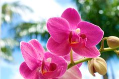 Orchid Photobombs Palm Tree