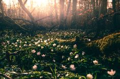 Euphoria           - Flowers on the ground | by HatCatPhotography |...