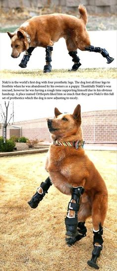 Meet the World's First Dog with Four Prosthetic Legs. Awwww, I love a happy ending.