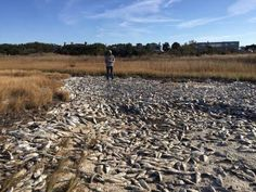 More Than a Million Pounds of Smelly Fish Wash Up Near One of Wealthiest Streets in Hamptons