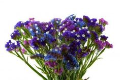 Photo about Purple Blue Violet Statice Bouquet or Sea Lavender with Little white blooms. Image of beautiful, blue, floral - 9236078 Wedding Pins, Wedding Flowers, Wedding Day, Cascade Bouquet, Complimentary Colors, Green Accents, Delphinium, Lush Green, Little White