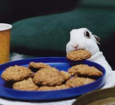 """Post is actually about """"Baking For Your Bunny,"""" but it was too cute to ignore!"""