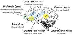 Neurobiologie des Lernens | Bildungsadler