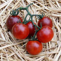 Blue Tomato Blue Pitts ブルートマト・ブルー・ピッツ