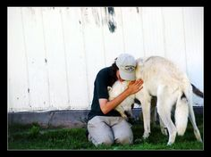 A staff member at Jungle Cat World Zoo shares a heart-warming moment of mutual affection with Csaba, an arctic wolf. For some people, taking care of ani. Jungle Cat World, Arctic Wolf, Wildlife Park, My Passion, Conservation, In This Moment, Cats, Heart, People