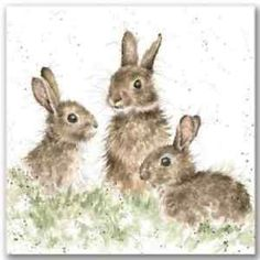 Wrendale Designs Country Set Greeting Card NEW Rabbits Born free