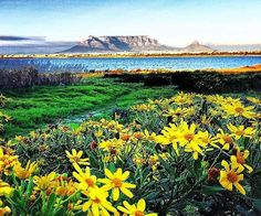 """""""View from work in the mornings"""" _______________________________ is running our weekend takeover, he'll be sharing his beautiful views of the Western Cape and Cape Town with you so sit back relax and share your shots with to be featured! Table Mountain, He's Beautiful, Cape Town, Wonders Of The World, Mountains, Mornings, Instagram Posts, Shots, Relax"""