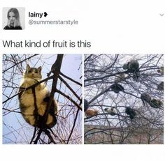 Harvest is bountiful this season funny pics, funny gifs, funny videos, funny memes, funny jokes. LOL Pics app is for iOS, Android, iPhone, iPod, iPad, Tablet