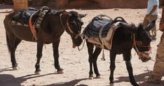 Please speak up for animals suffering in Petra by asking Jordan's Ministry of Tourism and Antiquities to ban their use at the historical site.