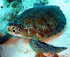 Green Turtle H2O Visions Bonaire