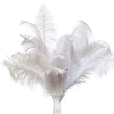 Ostrich Feathers - zgallerie.com