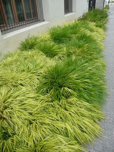 Japanese Garden Theme For A Getaway In Your Own Backyard Garden Deco, Garden Theme, Landscaping Plants, Front Yard Landscaping, Sloped Garden, Garden Landscape Design, Ornamental Grasses, Shade Plants, Shade Garden