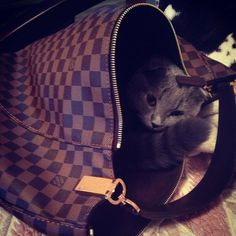 Fashion Designers #Louis #Vuitton #Handbags Save 50% Off, Louis Vuitton Outlet Supply Hot Style, 2016 New LV Bags Lowest Prices From Here.