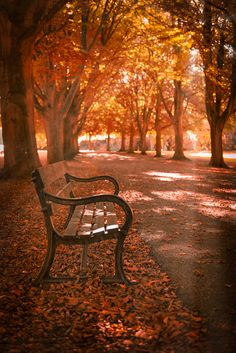 "wowtastic-nature: "" 💙 The Autumn Bench on by Gary Clark, Clevedon, United Kingdom ☀ NIKON "" Beautiful World, Beautiful Places, Arte 8 Bits, Autumn Scenes, Autumn Aesthetic, Fall Wallpaper, Autumn Photography, Coffee Photography, Fall Pictures"