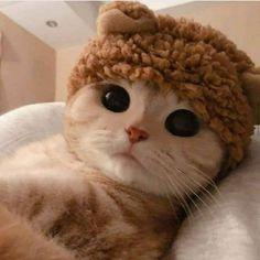 Cute Baby Cats, Cute Little Animals, Cute Cats And Kittens, Cute Funny Animals, Kittens Cutest, Cute Dogs, Funny Cats, Funny Cat Photos, Cute Cat Memes