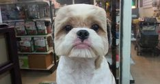 Taiwanese Give Dogs Perfectly Square Or Round Haircuts In Latest Trend | Bored Panda