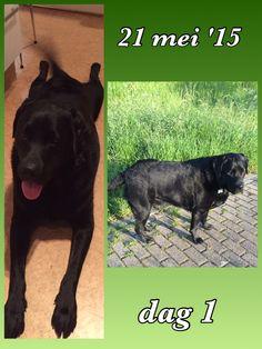 Benji 59,6 kg. Dogs, Animals, Animales, Animaux, Pet Dogs, Doggies, Animal, Animais