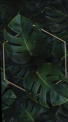 Hexagon golden frame on a tropical background vector premium image by Adj HwangMangjoo marinemynt Wallpaper Free, Plant Wallpaper, Framed Wallpaper, Tropical Wallpaper, Iphone Background Wallpaper, Cellphone Wallpaper, Aesthetic Iphone Wallpaper, Flower Wallpaper, Phone Backgrounds