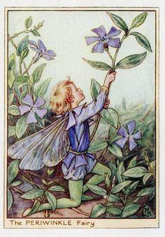 This beautiful Periwinkle Flower Fairy Vintage Print by Cicely Mary Barker was printed c.1950 and is an original book plate from an early Flower Fairy book. Cicely Barker created 168 flower fairy illustrations in total for her many books.