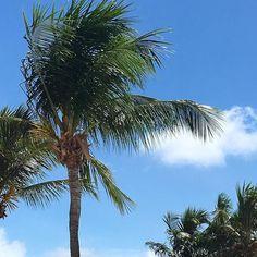Sunny vacation  #paraiba