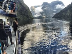 Mirrored seas, misty mountains and dolphins - Doubtful Sound has been on point lately!