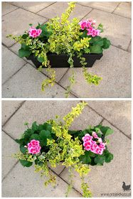Tampa Container Gardening for Indoor and Outdoor Needs - New ideas Balcony Flowers, Window Box Flowers, Balcony Plants, Outdoor Flowers, Flower Planters, Garden Planters, Flower Pots, Flower Ideas, Container Flowers