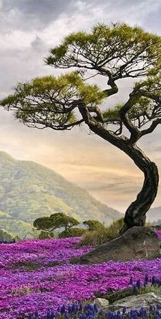 Wonderful old crooked tree