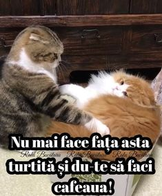 Love You Gif, Funny Moments, Funny Cats, Kitty, Smile, Humor, Memes, Box, Sweet