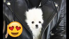 Puppy Surprises! :) Vine Compilation, Vines, Husky, November, Puppies, Dogs, Animals, Youtube, Animales