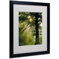 Trademark Art 'Magical Tree' Matted Framed Art by Kathie McCurdy, Size: 16 x 20, Multicolor