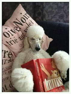 I will finish, I will finish, I will... #poodle