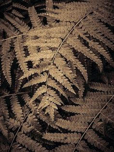 Tropical fern leaf print Autumn Scenes, Autumn Cozy, Cabins In The Woods, Leaf Prints, Amazing Nature, Fern, Tropical, Vintage, Color